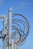 Barbed wire. Round barbed wire on top of a steel fence stock photo