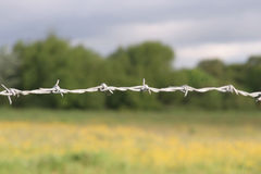 Barbed wire. A strand of barbed wire stock photo