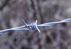 Barbed Wire. Oppression, injustice, environment Stock Photo