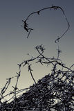 Barbed wire. Black and white image of a barbed wire Royalty Free Stock Image