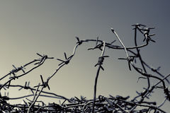 Barbed wire. Black and white image of barbed wire Stock Images