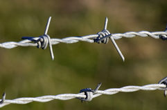 Barbed wire. On a fence Stock Image
