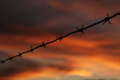 Barbed wire. Close up of barbed wire during sunset Royalty Free Stock Photography