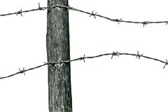 Barbed wire. Old loose barbed wire fencing isolated stock photo