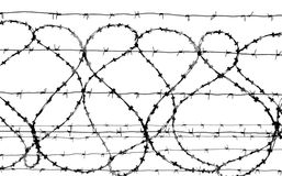 Barbed wire. Isolated on white, grayscale Royalty Free Stock Image