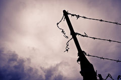 Free Barbed Wire Royalty Free Stock Photos - 23973398