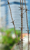 Barbed wire. Royalty Free Stock Photography