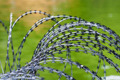 Barbed wire. For protection,  on green Stock Image