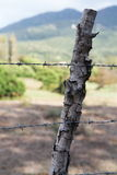 Barbed wire. For defense property royalty free stock photography
