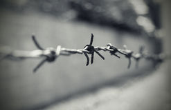 Barbed wire. In nazi camp Royalty Free Stock Image