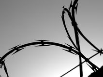 Barbed wire. Backlit barbed wire. Black and white image royalty free stock images