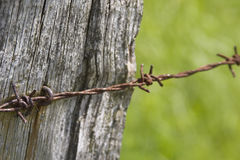 Barbed wire 3 Royalty Free Stock Photography