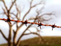 Barbed Wire. Abstract of barbed fencing wire Royalty Free Stock Photo