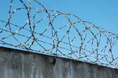 Barbed wire. On a background blue sky stock images