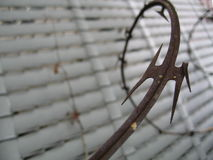 Barbed wire. Closeup of sharp barbed wire with white fence in background stock images