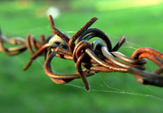 Barbed wire. Fence up close Stock Image