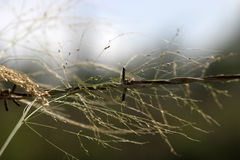 Barbed wire. Shows weathered barbed wire overgrown with grass Royalty Free Stock Image