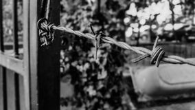 Barbed wire on abandoned garden metal door, black and white Royalty Free Stock Photo