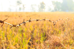 Barbed Wire around Farmland. In Sunrise Royalty Free Stock Photography