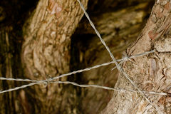 Barbed wire around tree. Close-up of barbed wired around tree with bark royalty free stock photography