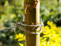 Barbed wire. Stock Photography