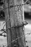 Barbed wire around a wooden pole. In black & white Stock Photography