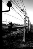 Barbed wire in auschwitz. Taken in black and white colors stock image