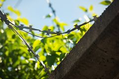 Barbed wire on the background of green, soft focus. Barbed wire against the backdrop of greenery, soft focus, fence, border, background, wall, protection royalty free stock photo
