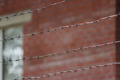 Barbed wire on a background of red brick wall. Royalty Free Stock Photo
