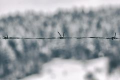 Barbed wire on the background of snow and coniferous forest stock photos