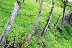 Barbed wire. A barbed wire on a fence with wooden parts.  stock photos