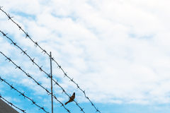 Barbed wire on blue sky with bird on wire, concept of freedom stock photos