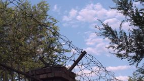 Barbed wire. On blue sky and tree background stock video