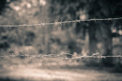 Barbed wire with blur background in vintage effect style Stock Images