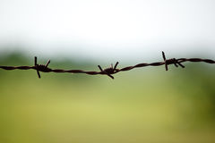 Barbed wire on blurred background Stock Photo