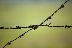 Barbed wire on blurred background Royalty Free Stock Photos