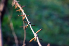 Barbed wire on blurred background. Stock Image
