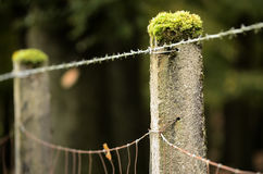 Barbed wire and border Stock Image