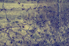 Barbed wire border Royalty Free Stock Image