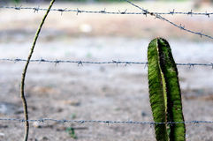 Barbed Wire and Cactus  Royalty Free Stock Photo