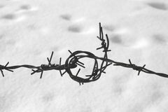 Barbed wire close-up. Against the backdrop of the snow Royalty Free Stock Photo