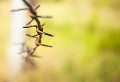 Barbed wire close up Royalty Free Stock Photos
