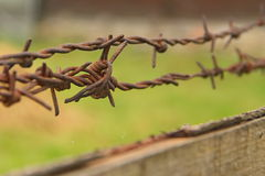 Barbed wire. Closeup(detail) of a rusty barbed wire Royalty Free Stock Photo