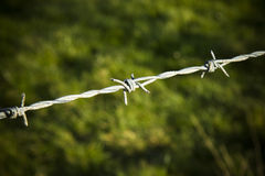 Barbed wire detail Royalty Free Stock Photography