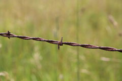Barbed wire detail with grassy background Royalty Free Stock Image