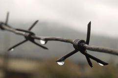 Barbed wire with drops of a rain. Royalty Free Stock Image