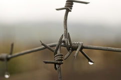 Barbed wire with drops of a rain. Stock Photos