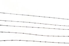 Free Barbed Wire Fence Stock Photos - 16903503
