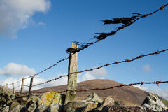 Barbed wire fence. Old barbed wire fence, rusty, with black plastic, attached to wooden posts on a stone wall with lichen Royalty Free Stock Photos