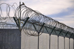 Barbed wire,Fence. Protection iron fence with barbed wire Stock Image